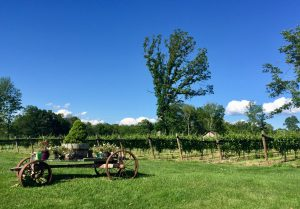Things To Do In The Litchfield Hills Manor House Inn